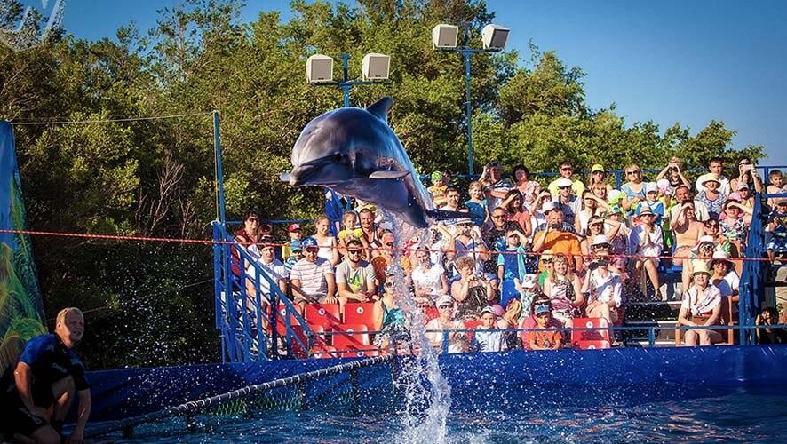 Развлечения в Яровом: дельфинарий