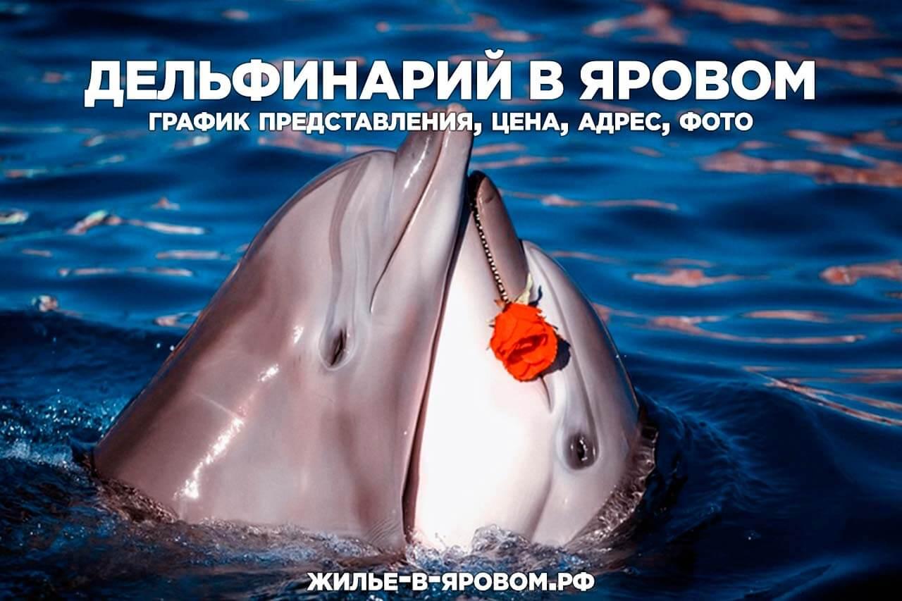 Дельфинарий в г. Яровое